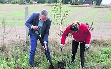 W Nowogardzie stawiają na zieleń i sadzą dużo drzew
