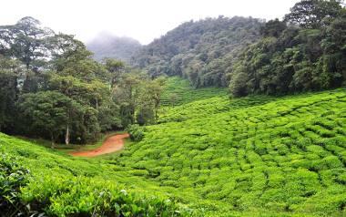 Wakacje w Kolumbii - praktyczny poradnik przed podróżą