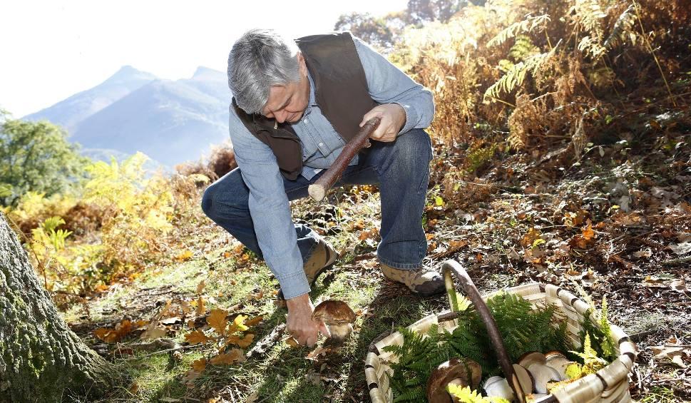 Film do artykułu: Lubuskie to grzybiarski raj. Gdzie szukać grzybów?