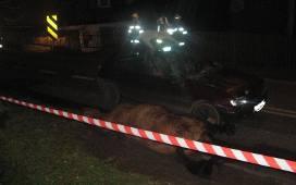 Wypadek W Orlowicach Samochod Osobowy Zderzyl Sie Z Koniem Zdjecia