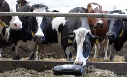 W tych województwach wiedzą jak produkować mleko - mamy dane dotyczące średniej wydajności od krowy