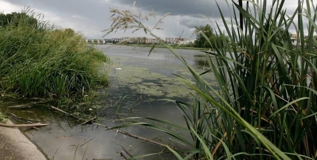 Ekolodzy wciąż chcą zatrzymać odmulanie Wisłoka w Rzeszowie