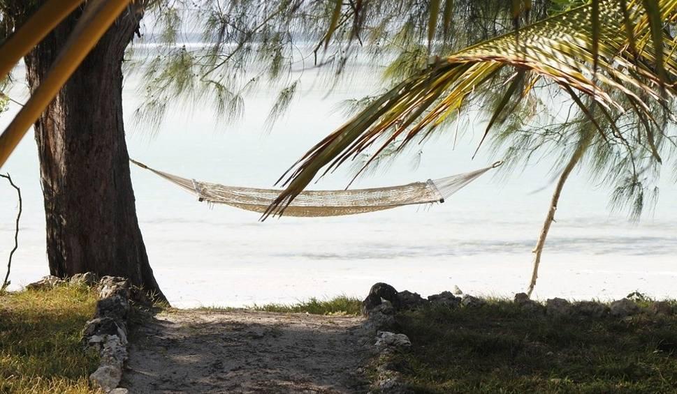 Film do artykułu: Praca na Zanzibarze. Pół roku w świetnych warunkach na rajskiej wyspie. Ta oferta podbija internet