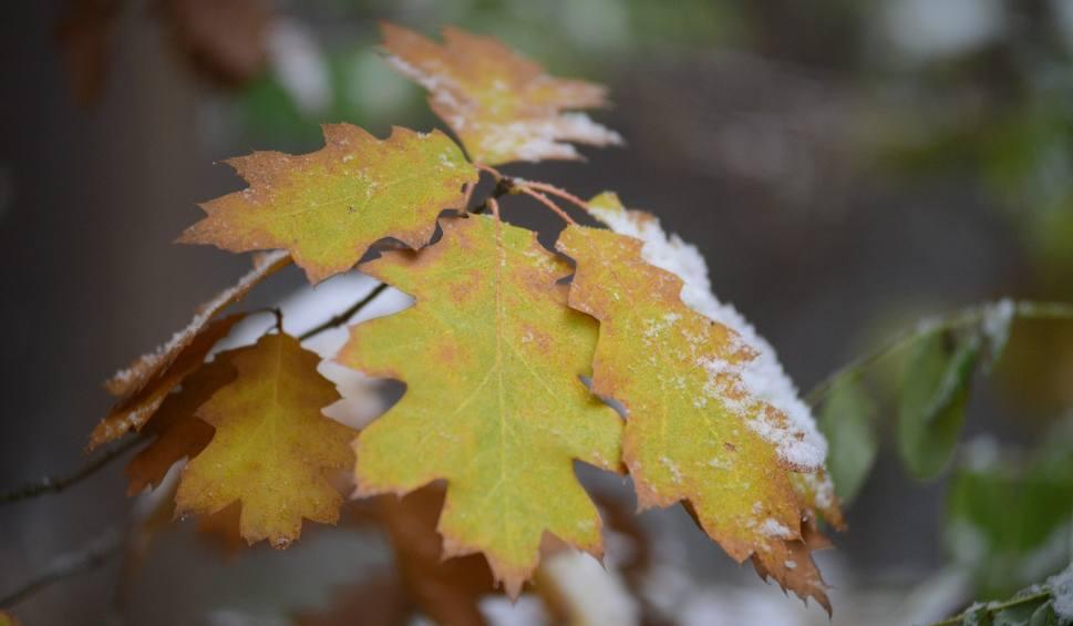 Film do artykułu: Pogoda na czwartek, 29 listopada. Czwartek pogodny i bez opadów