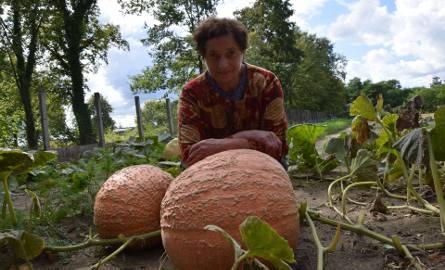 Wanda Matras z wielką pasją uprawia warzywa i owoce w Otyniu