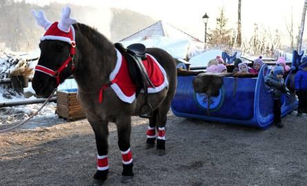Wioska Świętego Mikołaja z bajkową chatką i saniami w Bałtowie