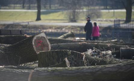 Wycinka drzew w Parku Śląskim