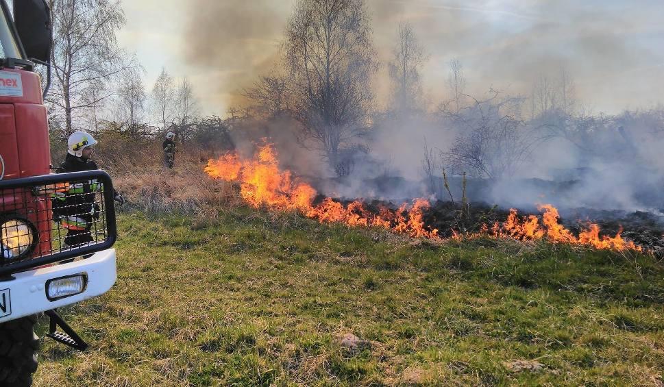 Film do artykułu: Seria pożarów w gminie Odrzywół - znów płoną lasy. Grasuje podpalacz?