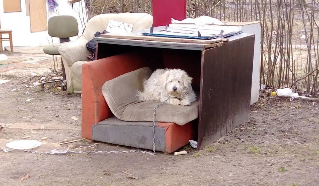 W sobotę psy z koczowiska przy ul. Lechickiej zostały zabrane do schroniska