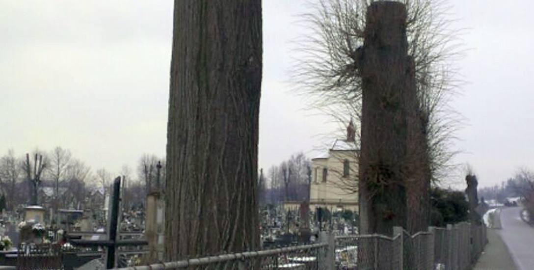 W Tyczynie i Rzeszowie drzewa idą pod topór, bo tak zdecydowali urzędnicy. Dlaczego doszło do wycinki?