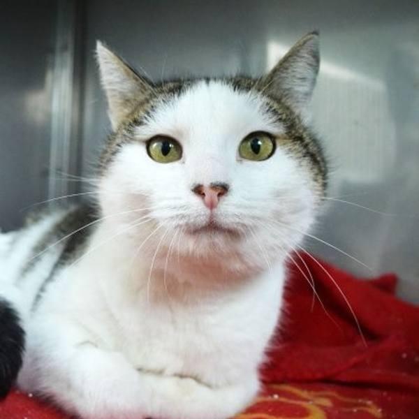 Neska trafiła do schroniska w tym roku. Jest to towarzyska, biało-bura kotka. Ma około 1 rok. Jest odrobaczona i zaszczepiona.