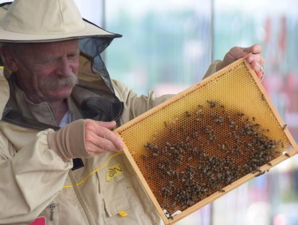 Pszczoły zamieszkały na dachu galerii VIVO! Krosno. Rocznie wyprodukują około 100 kilogramów miodu [ZDJĘCIA, WIDEO]