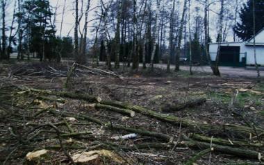 Rogalin, Gołuski, Poznań - to tylko jedne z licznych nielegalnych wycinek, do których doszło po 1 stycznia