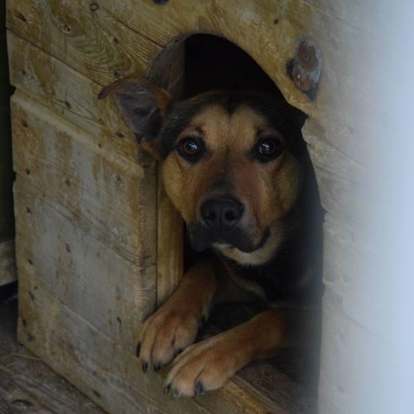 Zielona Góra, 1 czerwca 2020 r. Schronisko dla Bezdomnych Zwierząt. Małe, duże, puchate i szorstkowłose. Mnóstwo psów w schronisku czeka na adopcję.