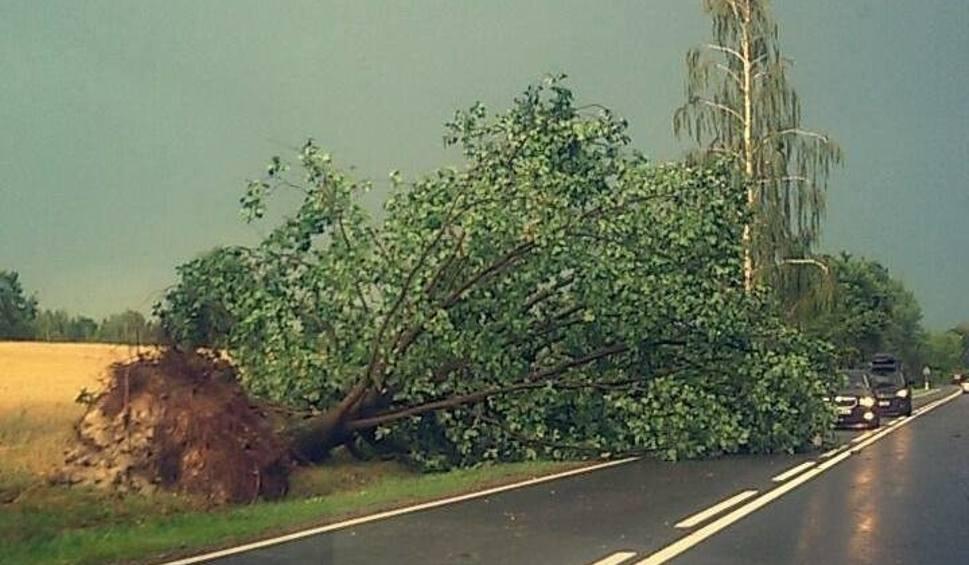 Film do artykułu: Burza w regionie radomskim. Przewrócone drzewa, uszkodzone dachy