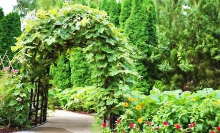 Rajski ogród jest inspirowany średniowiecznymi ogrodami. Wbrew pozorom to doskonały pomysł na nieduży przydomowy ogród - wygodny i relaksujący.