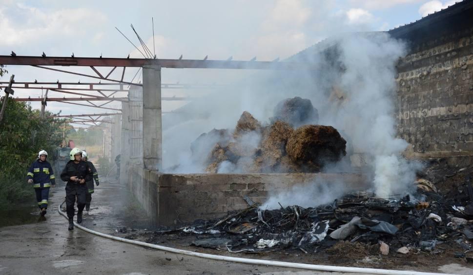 Film do artykułu: Pożar w Łebieniu koło Lęborka. Ponad dwieście zwierząt zginęło w pożarze obory i chlewni [zdjęcia, wideo]