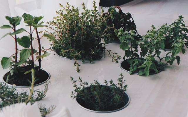 """Blat, z którego """"wyrastają"""" zioła wygląda oryginalnie."""