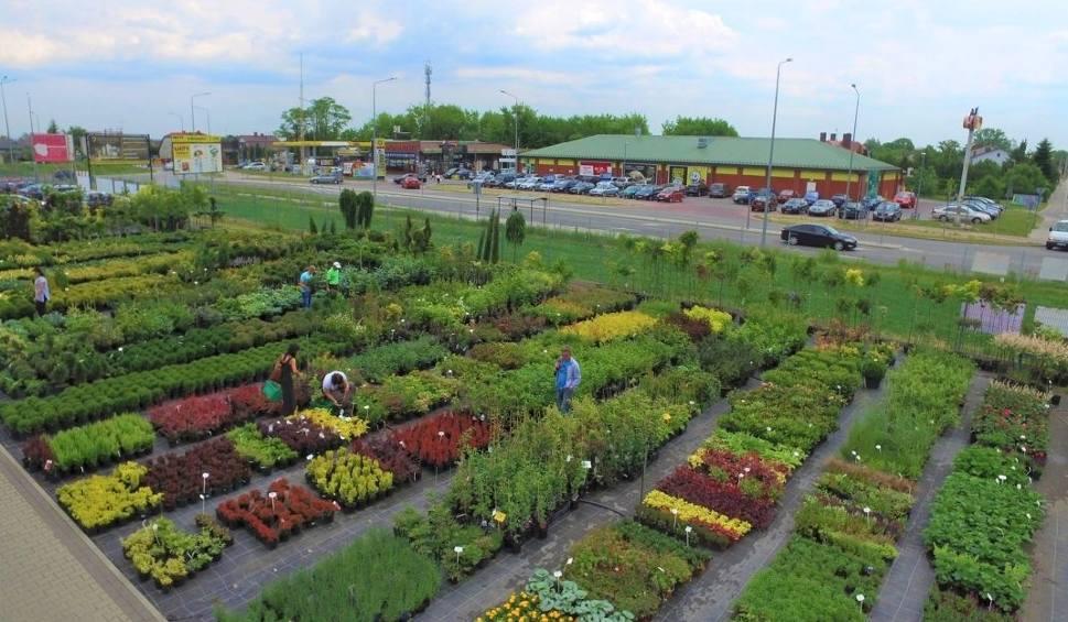 Film do artykułu: Modny ogród 2019. Jak w tym roku zaaranżować nasz zielony zakątek?