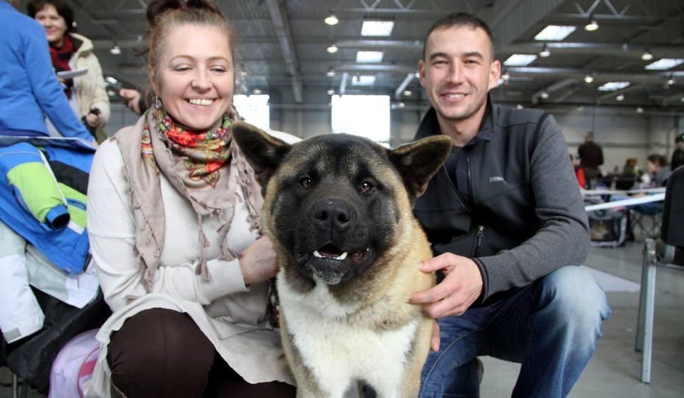 Film do artykułu: Międzynarodowa wystawa psów rasowych w Lublinie. Czworonogi przyjechały z 22 krajów (ZDJĘCIA)