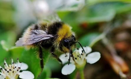 Pszczelarze apelują  do rolników o ochronę pszczół