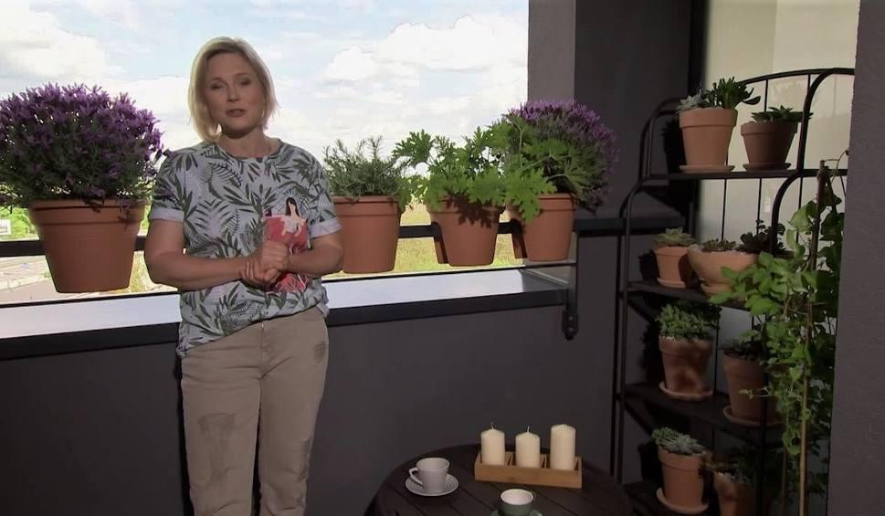 Film do artykułu: Jak zaaranżować mały balkon? Wybieramy rośliny balkonowe łatwe w uprawie