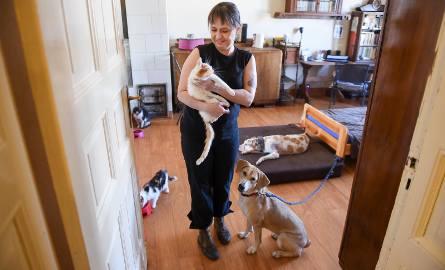 Hospicjum dla zwierząt w Toruniu. Zobacz w jakich warunkach odchodzą psy i koty. Mamy zdjęcia