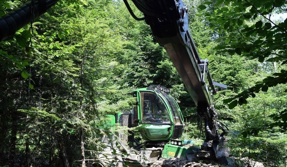 Film do artykułu: Harwester wycina drzewa w Nadleśnictwie Krasiczyn. Ekolodzy alarmują: Tak niszczy się środowisko! [ZDJĘCIA, FILM]
