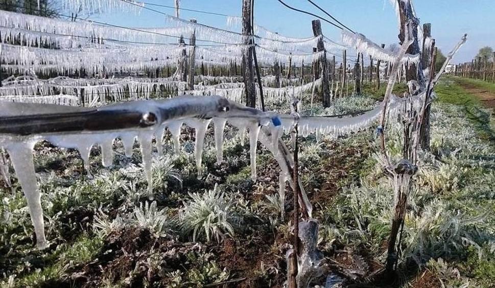 Film do artykułu: Trzech ogrodników po lodzie? IMGW ostrzega mieszkańców Lubuskiego przed przymrozkami!