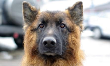Policjanci uratowali dwa psy, które leżały na środku jezdni