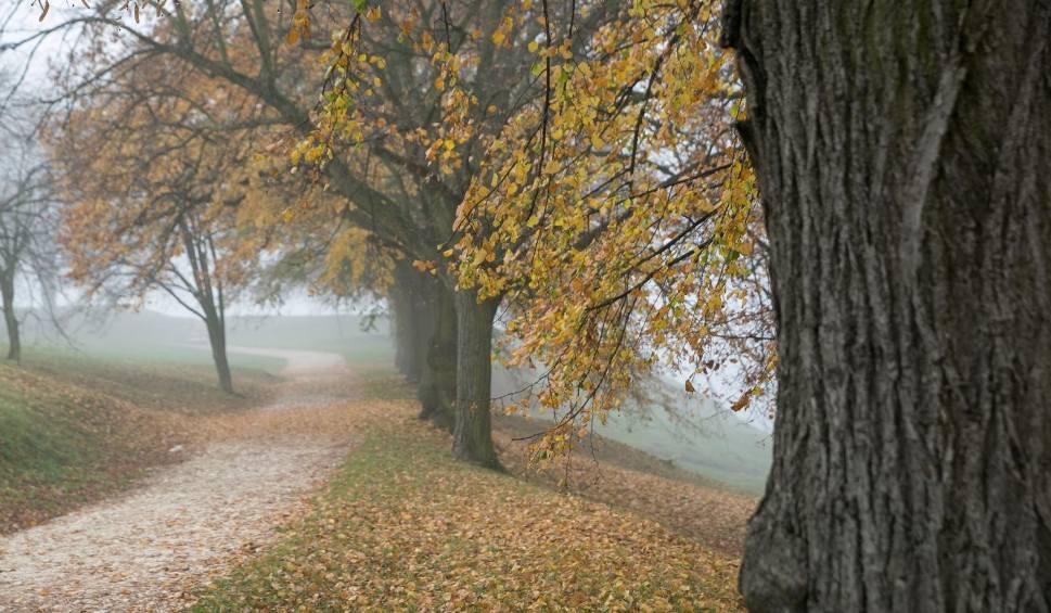 Film do artykułu: Piątek rano mglisty, po południu rozpogodzi się w centrum i na południu