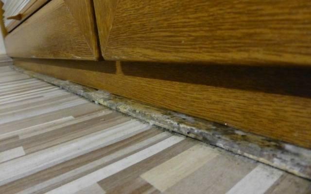 Na zdjęciu widać grzyb na listwie podłogowej, który powstał w wyniku wilgoci, która cieknie z szyb okiennych. Para wodna wykrapla się w miejscu ramki