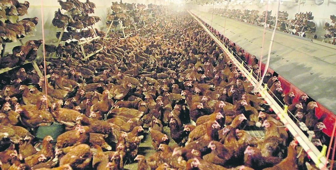 Hodowla drobiu i zwierząt oraz uprawa roli są dziś niemożliwe bez chemii. Profesorowie z Uniwersytetu Przyrodniczego zapewniają, że dopuszczane do użytku