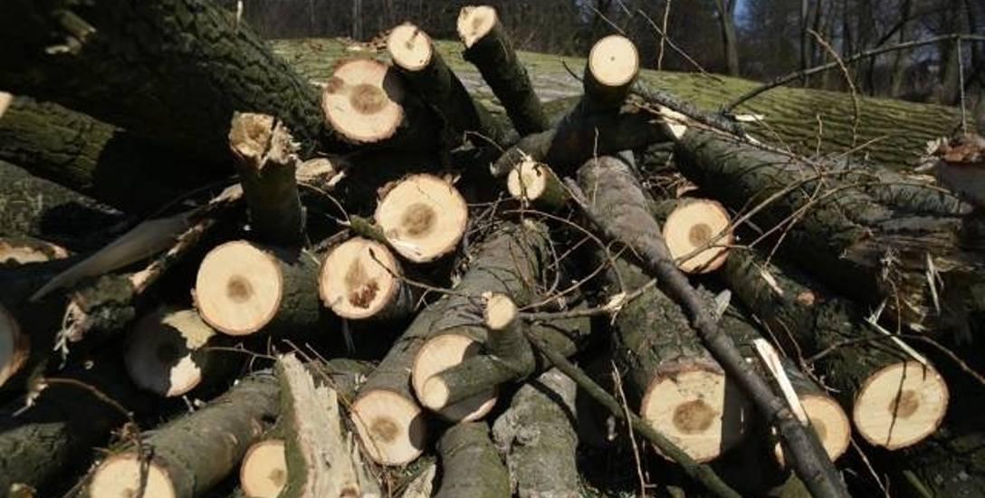 W Cieszynie nie godzą się na wycinkę drzew przy torach kolejowych