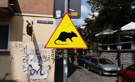 Uwaga, szczury! Nowy znak w centrum miasta