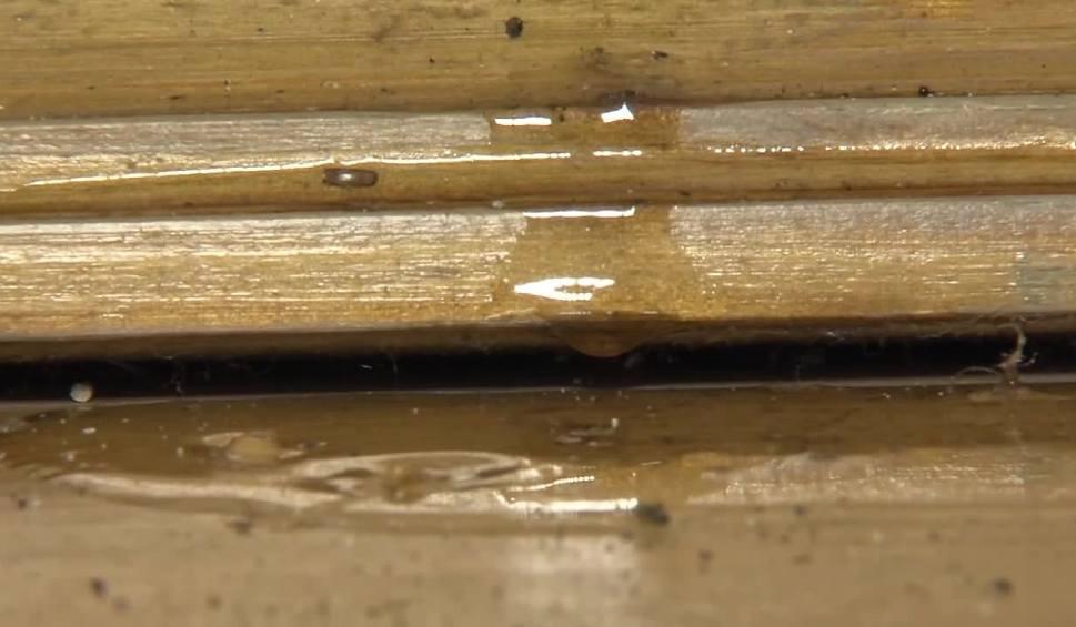 Film do artykułu: Rój pszczół pod dachem mieszkanki Starogardu Gdańskiego. Miód leje się po ścianach [wideo]