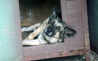 Powoli zmienia się świadomość dotycząca praw zwierząt [Rozmowa Dziennika Łódzkiego]