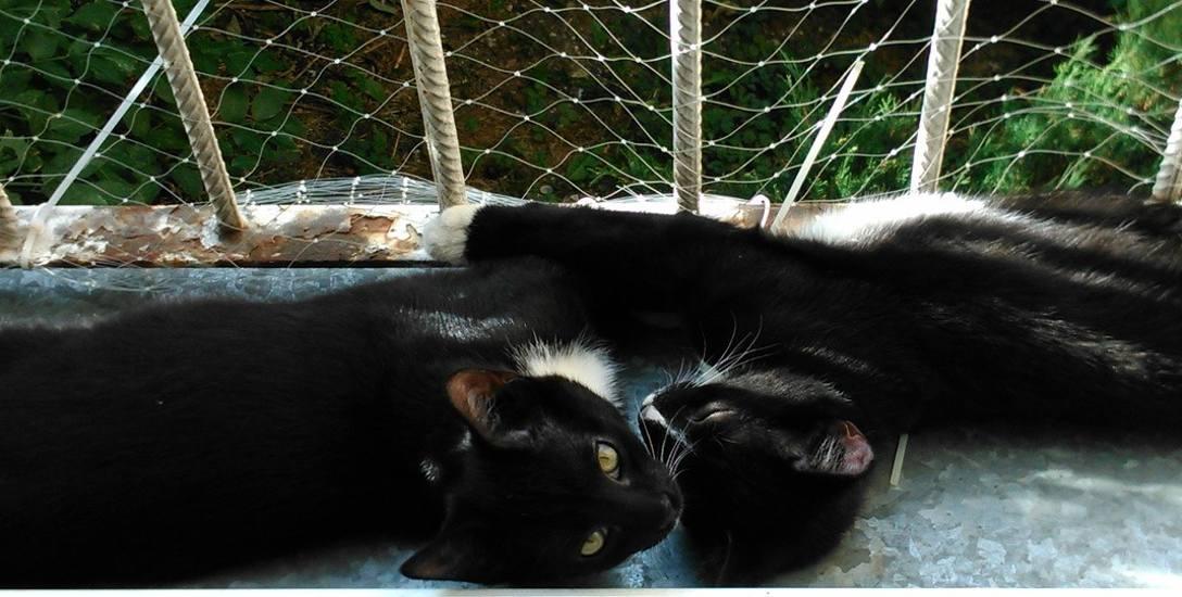 Bolek i Lolek na szczęście znalazły swój nowy dom. Ale nadal można pomagać innym bezdomnym kotom
