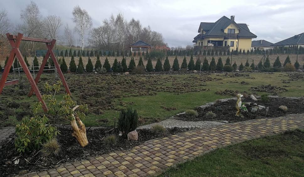 Film do artykułu: Dziki zniszczyły posesję rodzinie z Bydlina [zdjęcia]
