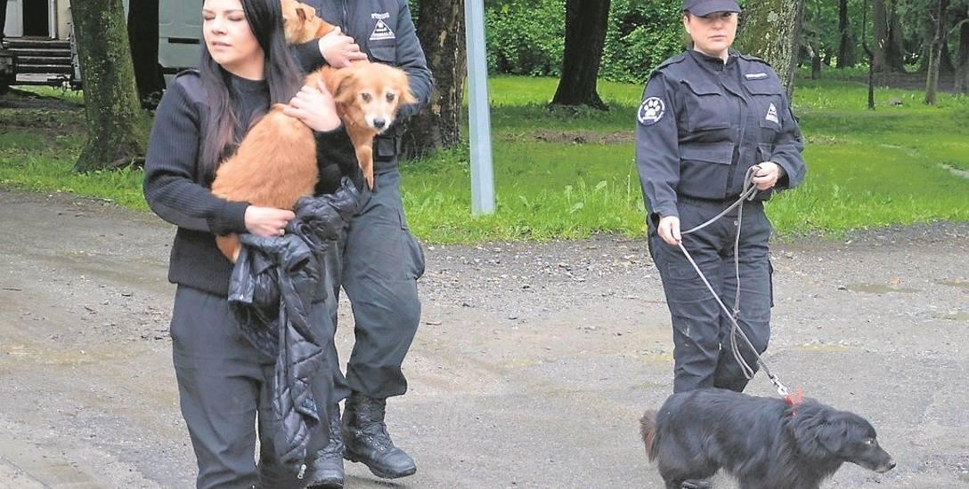Psy z pozbawionej światła piwnicy uwolnili inspektorzy z OTOZ Animals. Zwierzaki co najmniej trzy tygodnie spędziły w pomieszczeniu, którego nie sprzątał