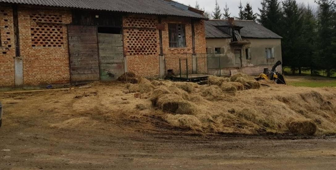 To w tym gospodarstwie w powiecie leskim żyły zwierzęta, które nie miały co jeść i pić. Brodziły we własnych odchodach.