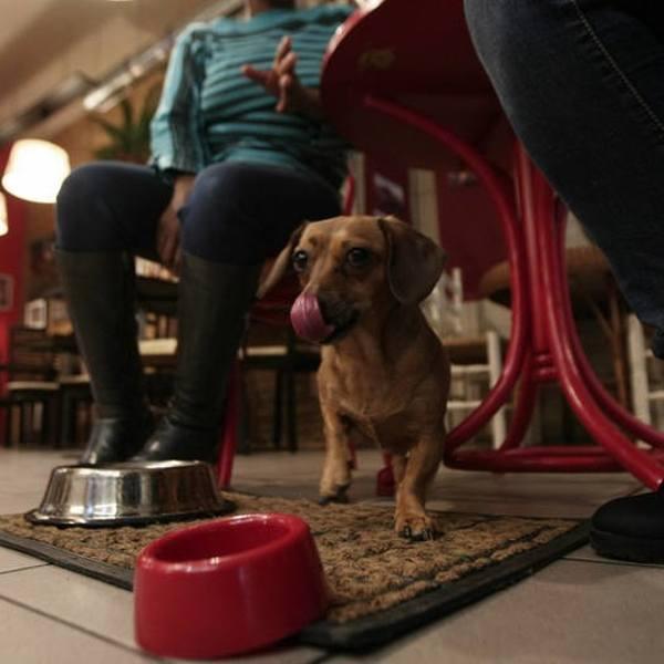 Miejsca przyjazne psom w Toruniu. W tych lokalach czworonogi są mile widziane! Sprawdź!