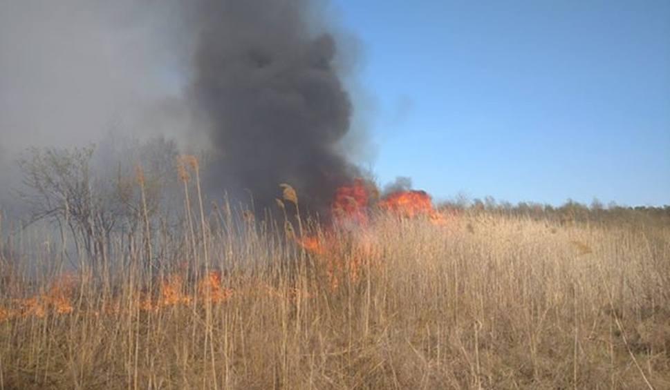 Film do artykułu: Strażacy od kilku godzin walczą z dużym pożarem traw w okolicach jeziora Mytycze w pow. lubartowskim. Spaliło się już ponad 30 ha. Zobacz