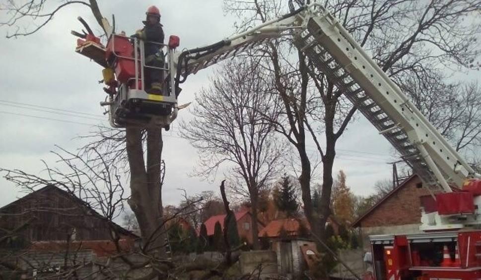 Film do artykułu: Chroberz. Śmierć na drzewie. Dramat podczas ścinania gałęzi