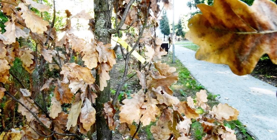 Było huczne otwarcie parku w Zielonej Górze, a dziś część drzew już... uschła