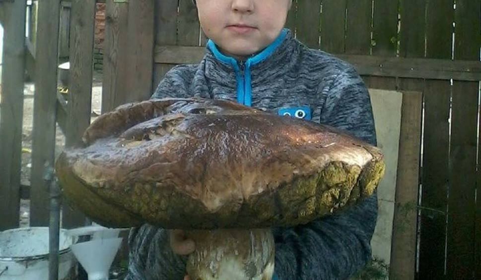 Film do artykułu: Prawdziwek gigant. Ważył ponad 4,5 kg! Gdzie takie rosną?