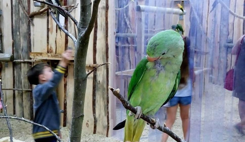 Film do artykułu: Papugarnia w Zielonej Górze? Tak! Niebawem otwarcie. Sprawdźcie, kogo będziemy mogli zobaczyć i ile zapłacimy za bilet [ZDJĘCIA, WIDEO]