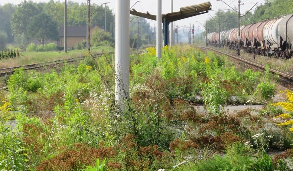 Film do artykułu: Brzeźnica. Zrobili dworzec za 3 mln zł, ale nie ma pociągów, PKP zlikwidowało kursy