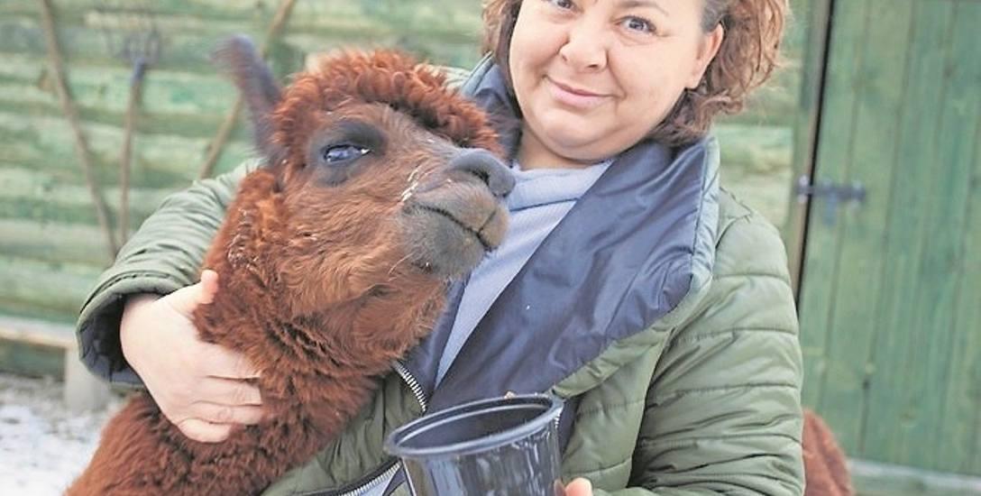 Ewa Godlewska-Jeneralska rzuciła pracę w Panoramie TVP 2, żeby w Czchowie hodować alpaki