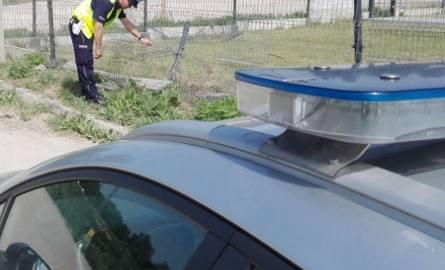 Kierowca hondy, która wjechała w ogrodzenie w Jędrzejowie miał ponad 2 promile alkoholu w organizmie.